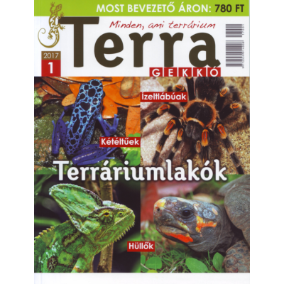 Terra Gekkó  1